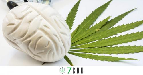 Model Brain with Hemp leaf
